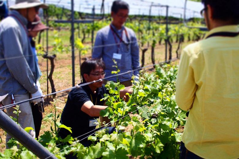 【グランポレール勝沼ワイナリー】自分のワイン造りに挑戦!