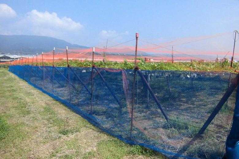 防鳥ネットを張りました。~長野古里ぶどう園より~