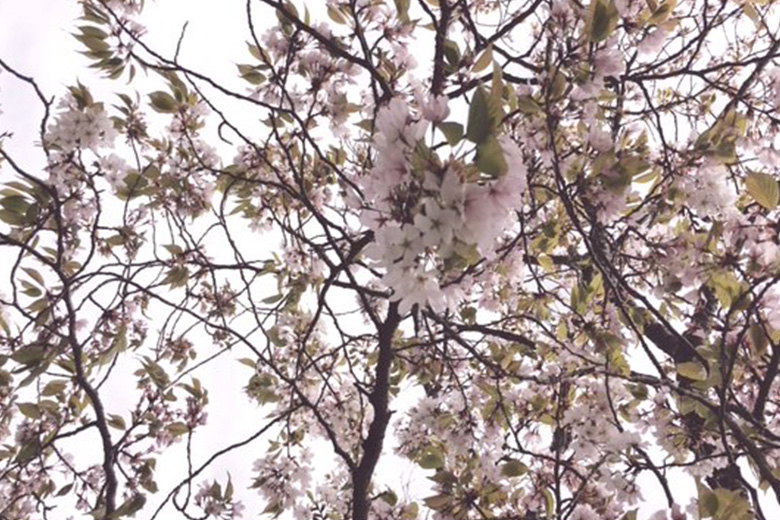 春の訪れと共に、グランポレールの瓶詰めも最盛期です!~岡山ワイナリーより~