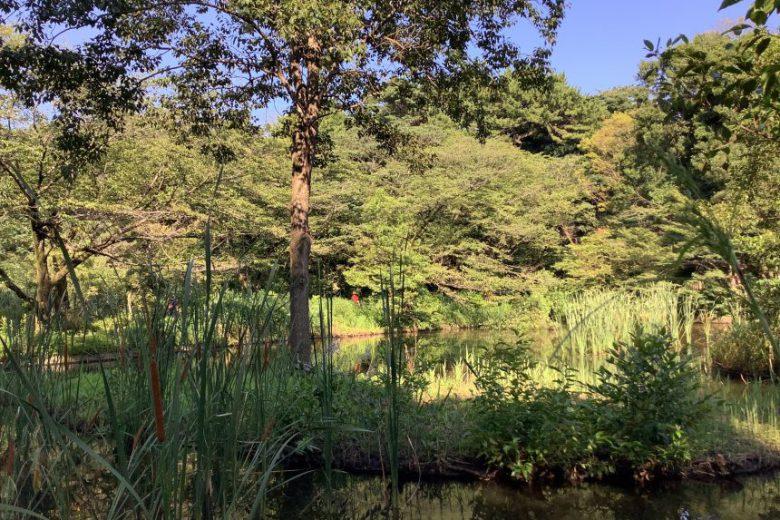 恵比寿旅行社#84: <br>ガーデンプレイスから抜けて行った先に見える広大な森の話(後編)